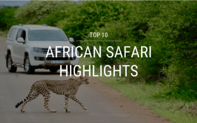 Top 10 African Safari Highlights